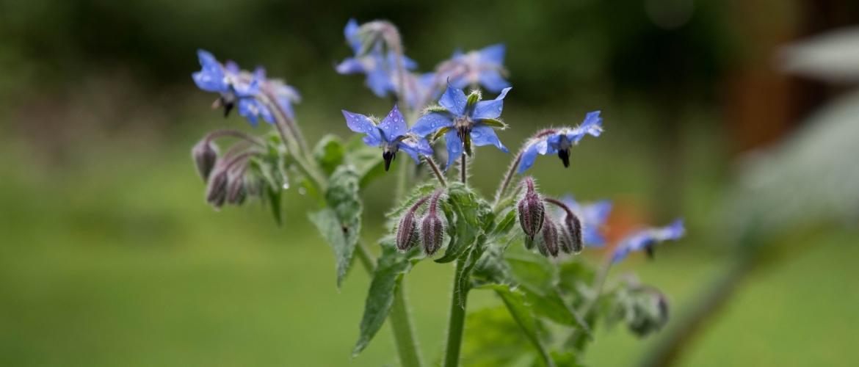 MoestuinLive 5 april - Nomadische eetbare tuin & wildplukken