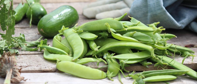 MoestuinLive 1 maart: permacultuur & voedselbos