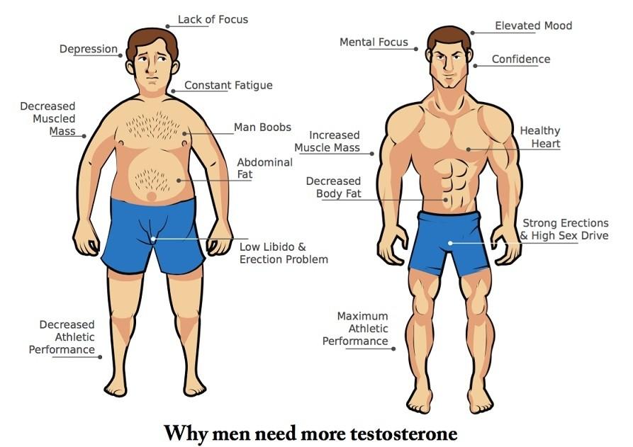 Voordelen Testosteron