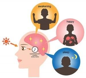 Biologische klok heeft invloed op je gezondheid en gewicht