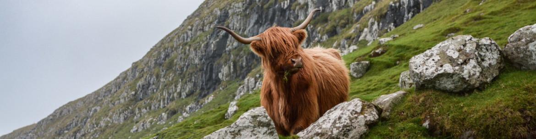 Reizen door Schotland