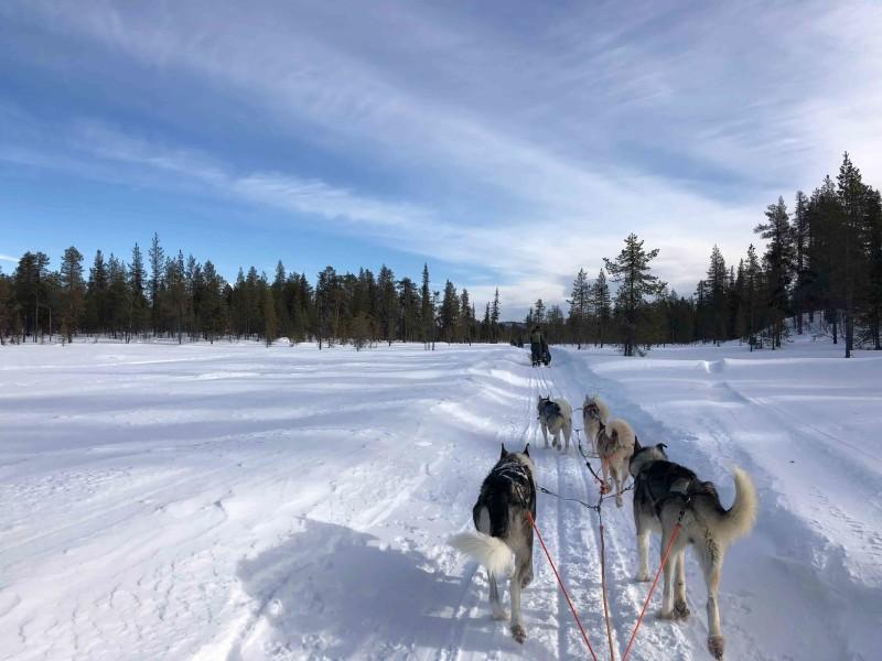 Huskytocht in besneeuwd Lapland