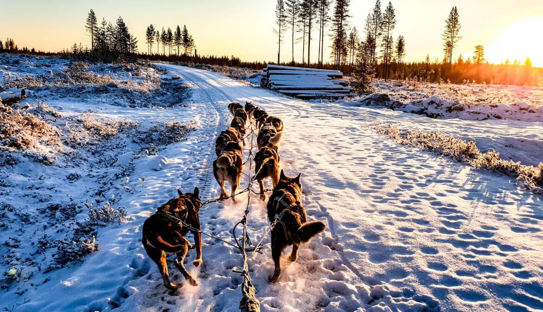 Reizen naar Lapland met jongeren