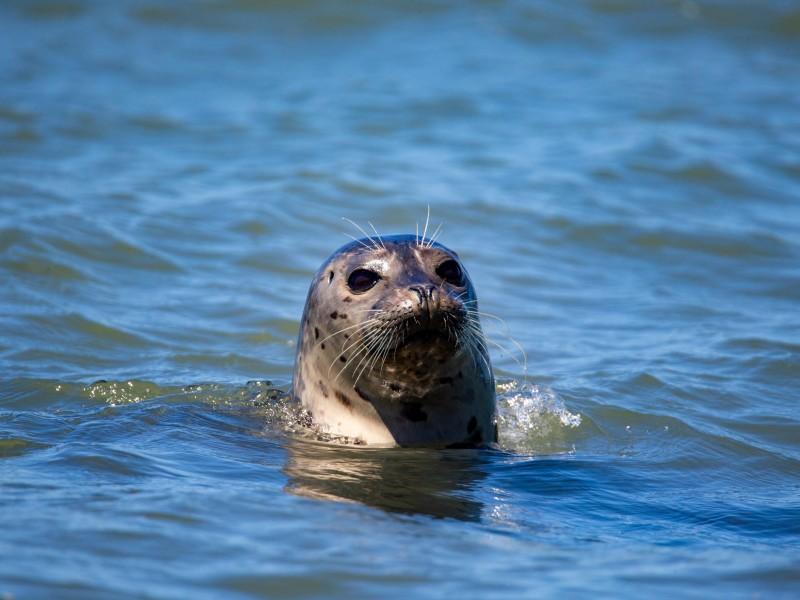 Zeehonden spotten op Ameland
