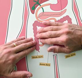 De osteopaat mobiliseert buikweefsels bij littekens.