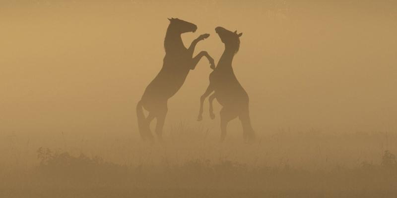Paarden met tegenlicht
