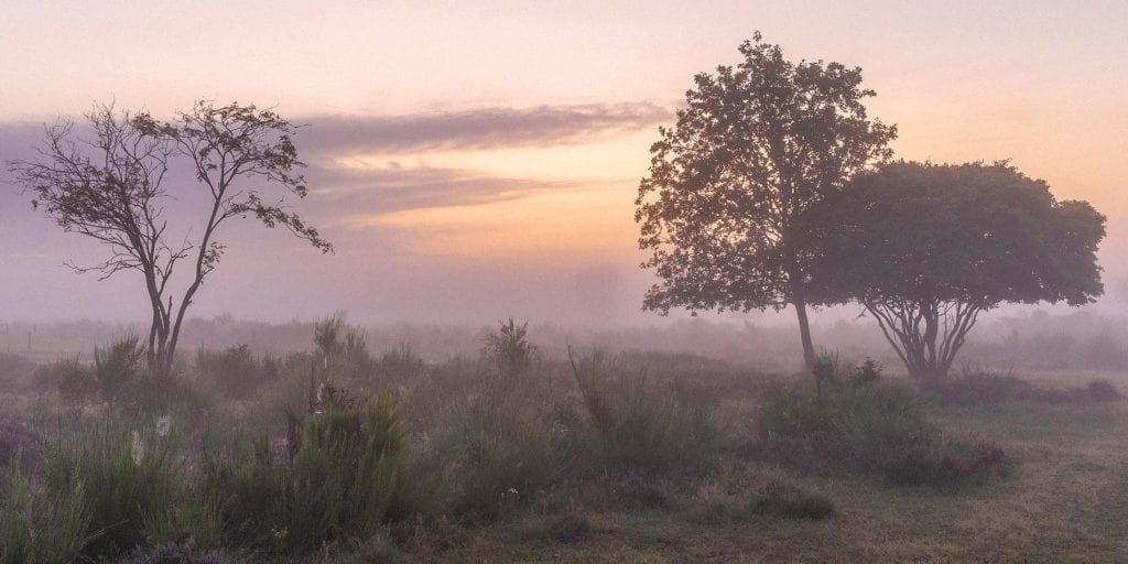 Nederlandse heide tijdens golden hour