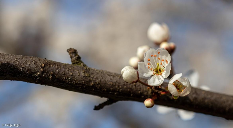 Bokeh bloem