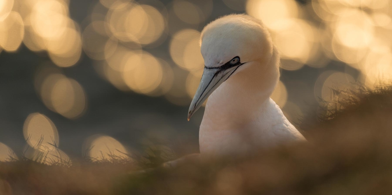 Scherptediepte vogel