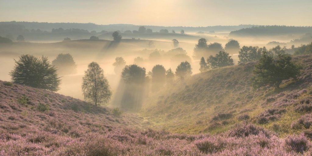 Landschapsfotografie op de heide
