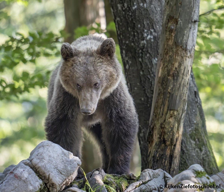 Beste plek om beren te fotograferen