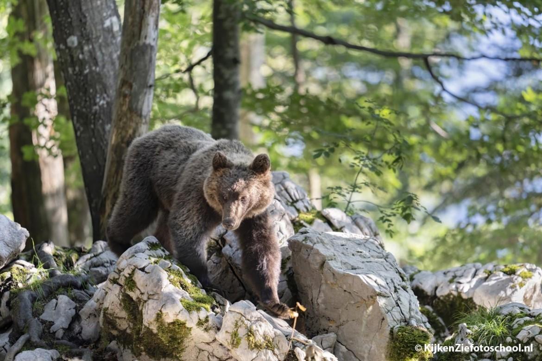 Waar fotografeer je het beste beren?