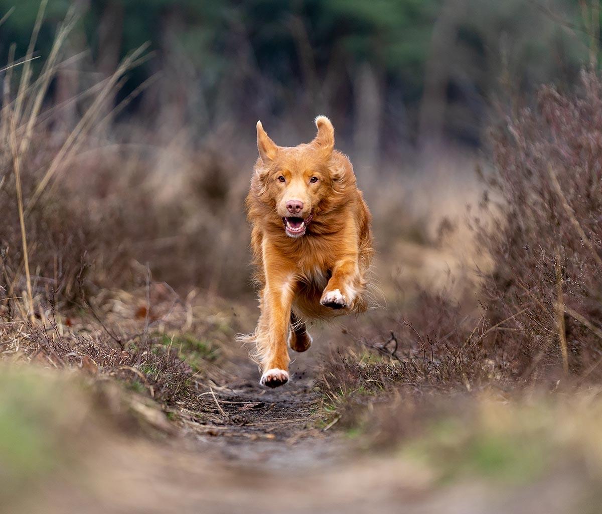 honden actiefotografie