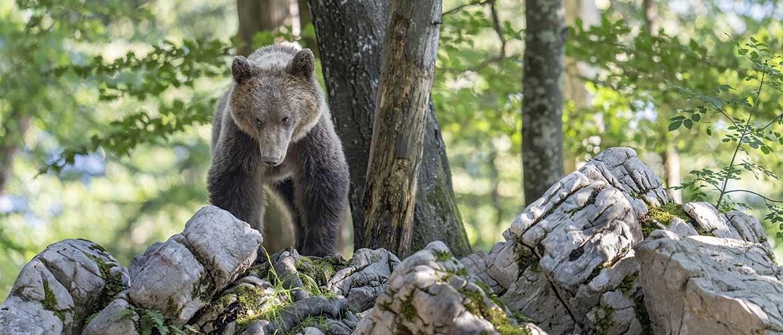 beren fotografie slovenie