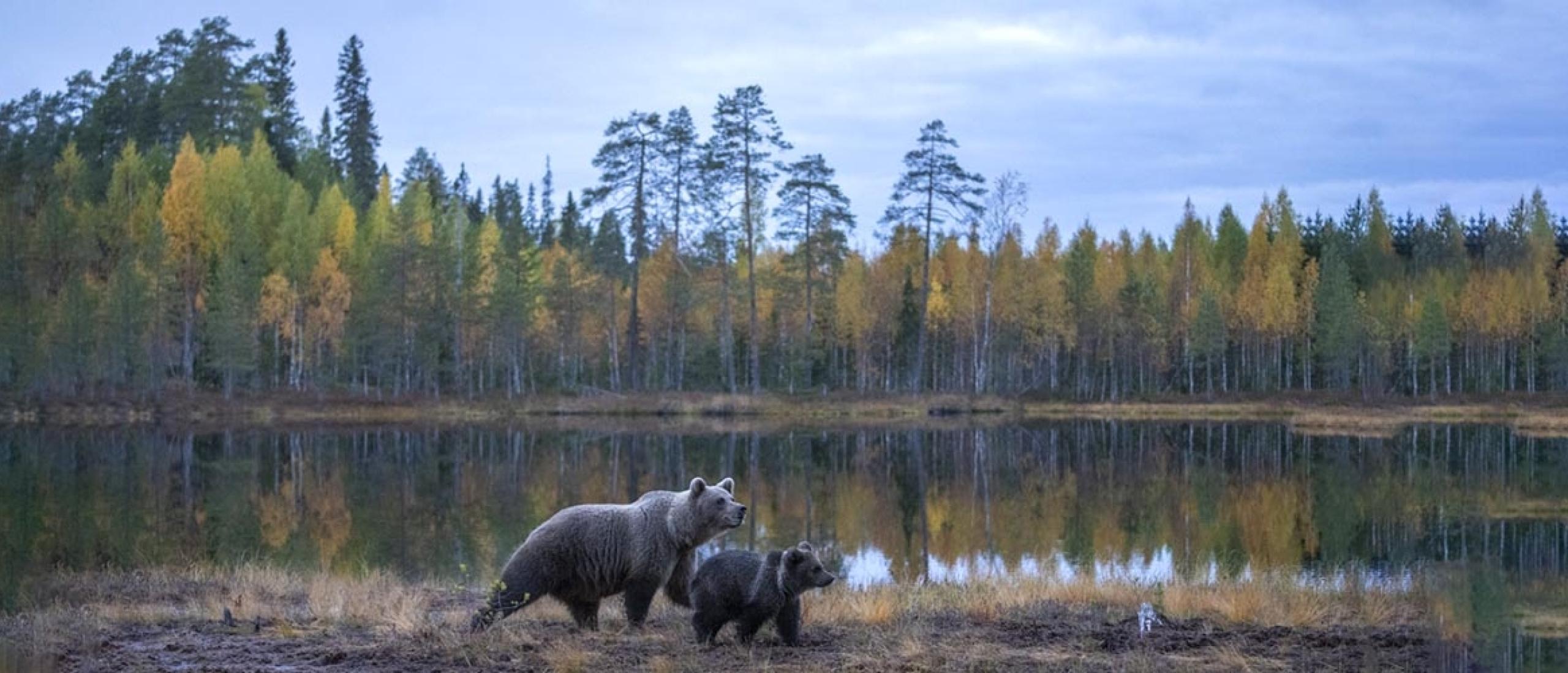 Beren Finland-herfst 2021