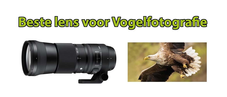 Beste lens voor vogelfotografie