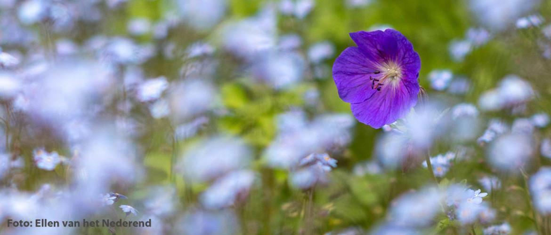 Inspirerende bloemenfotografie