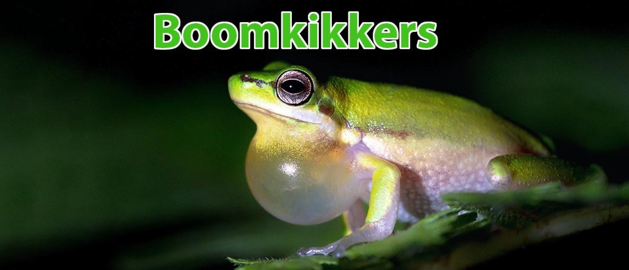 Boomkikkers fotograferen: 35 Tips