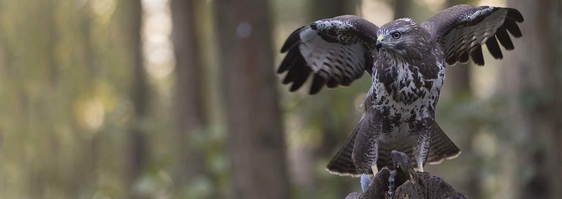 vogelfotografie zoomlens