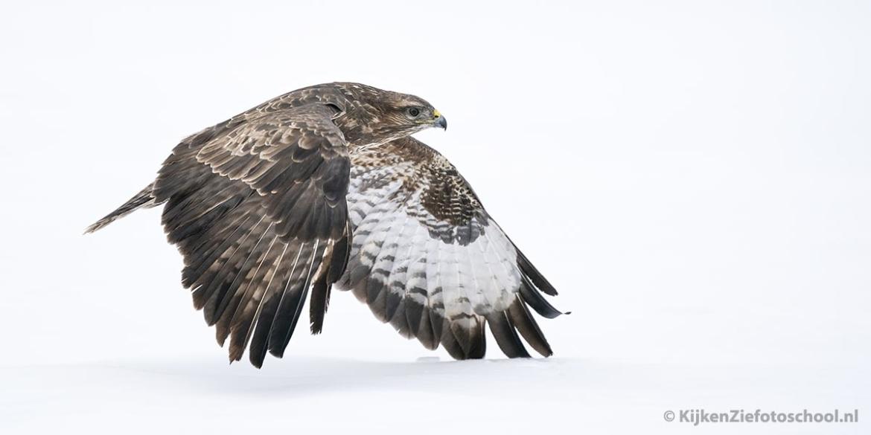 vliegende buizers fotograferen