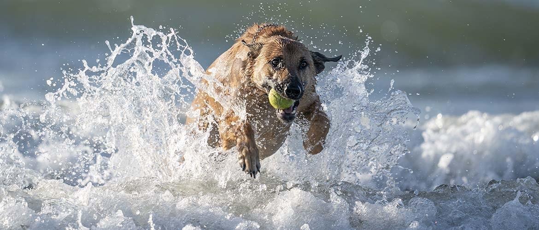 Actiefotografie: Honden & spontane ontmoeting op het strand