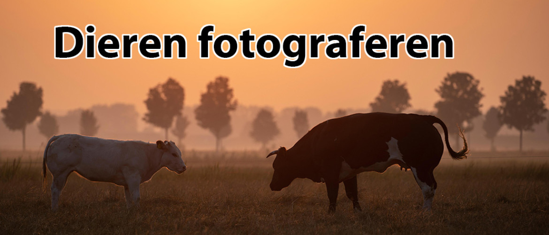 Dieren fotograferen: 94 tips