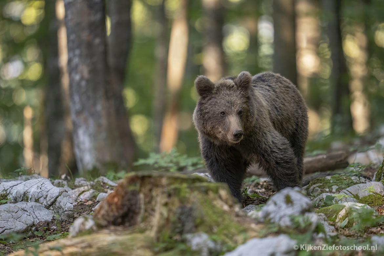 Slovenie beste plek beren fotografie