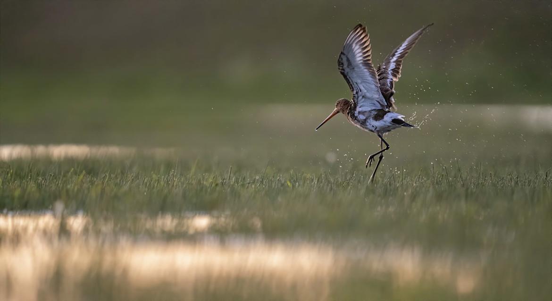 vogelfotografie lens