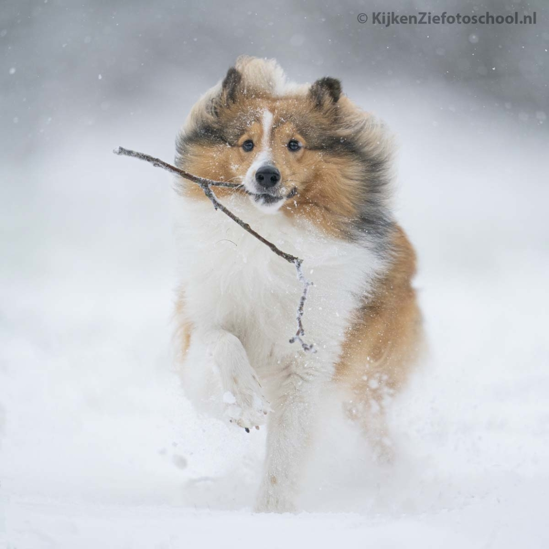 Camera instellingen honden fotograferen