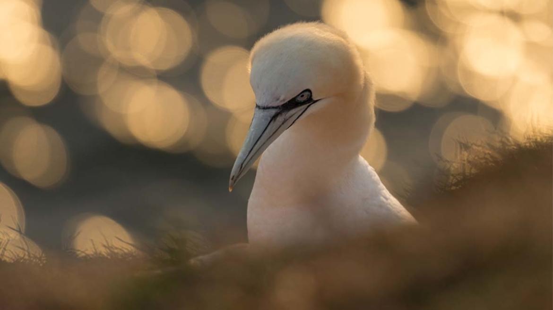 camera vogels fotograferen