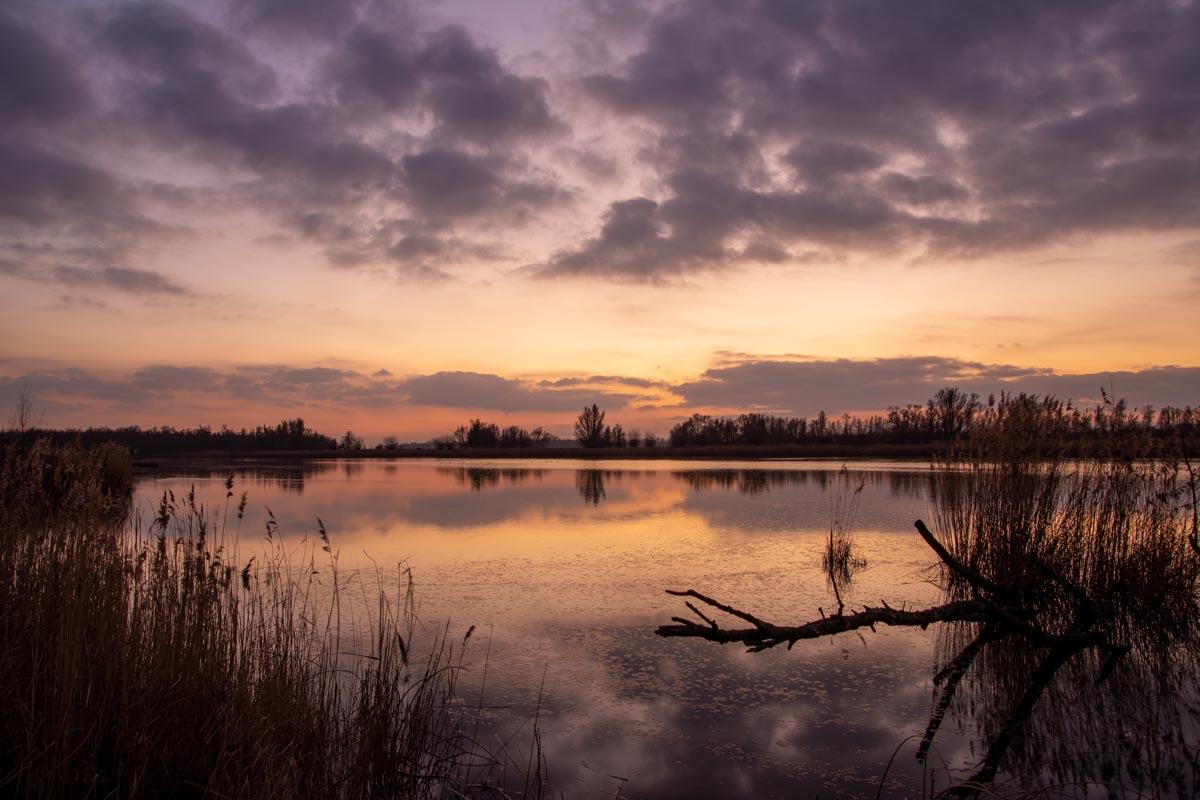 Biesbosch landschap