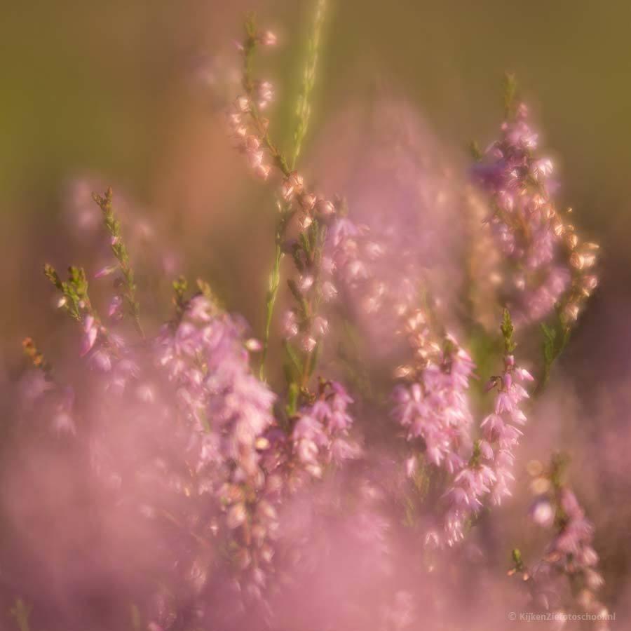 lensbaby velvet voor fuji