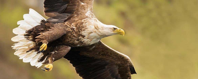 welke lens voor vogels fotograferen