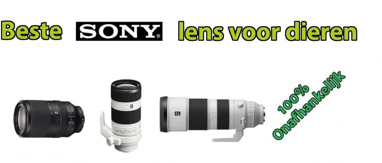 Beste Sony lens voor dierenfotografie & wildlife