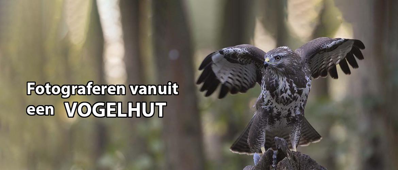 Vogels fotograferen vanuit een vogelhut: 56 Tips