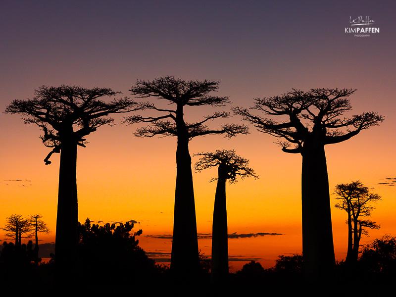 Madagascar Photography: Baobab Silhouettes