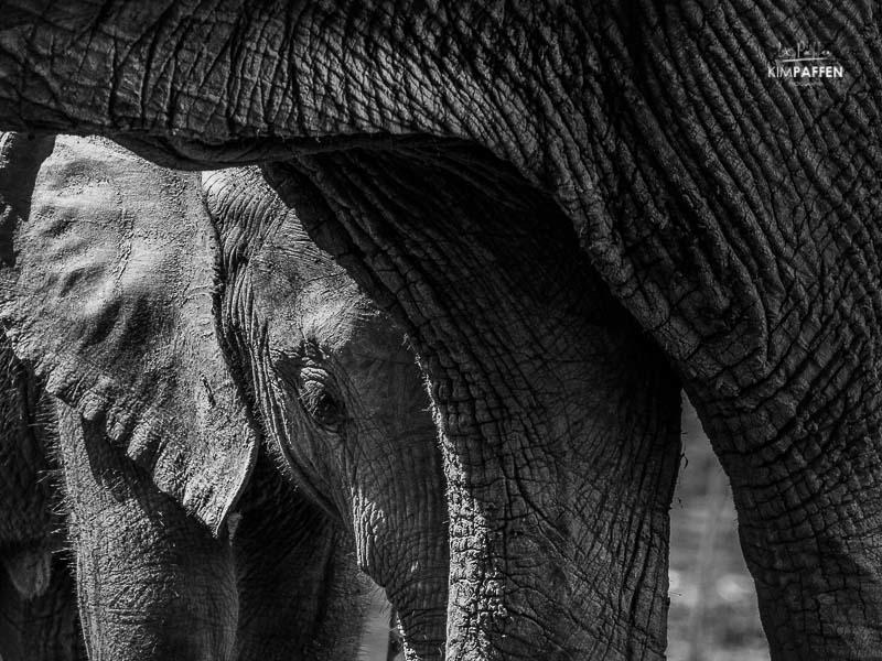 Wildlife Photography Zambia: Baby Elephant