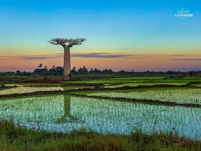 Madagascar Photography: Baobab reflection
