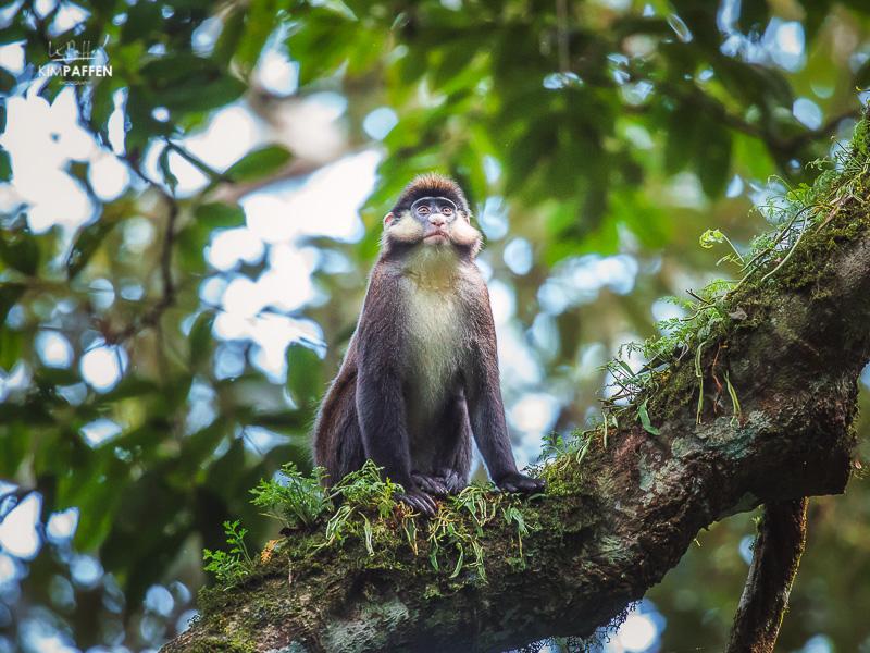 Primate Photography Kibale Forest National Park Uganda
