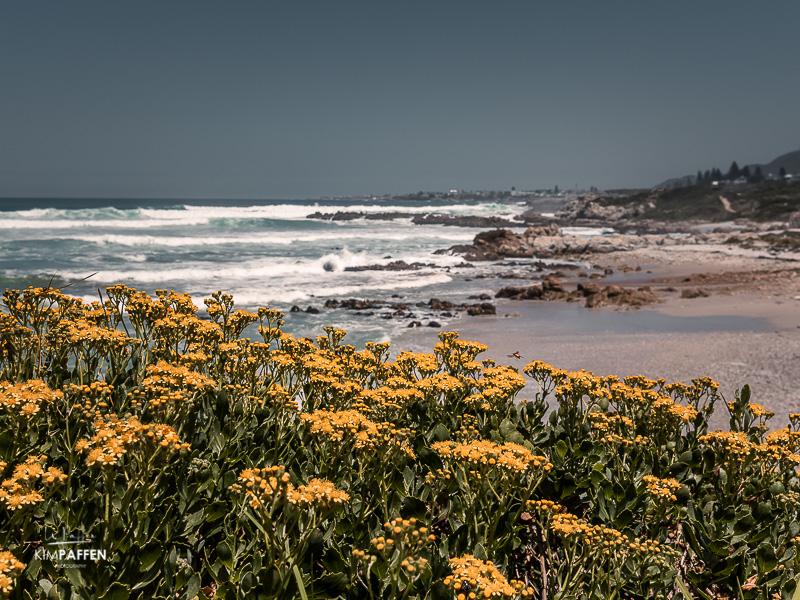 Hermanus Beach South Africa