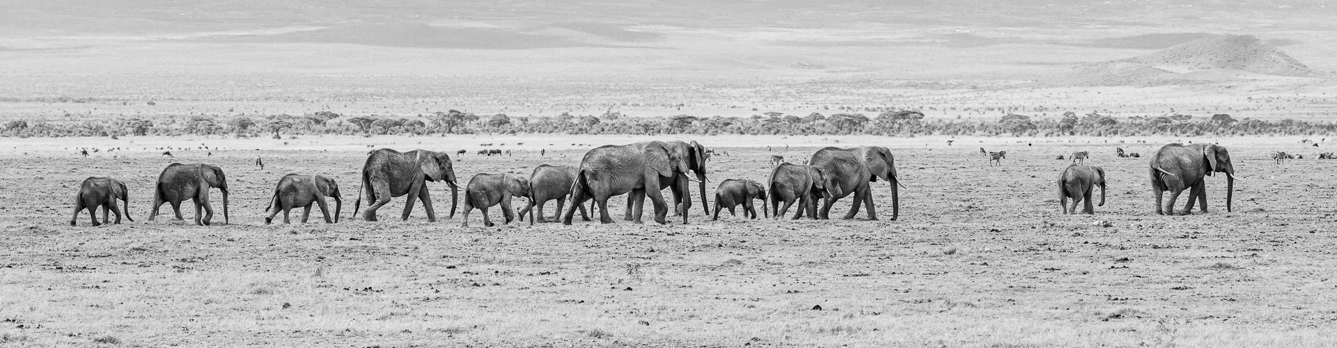 Wildlife Photography: animals around the world