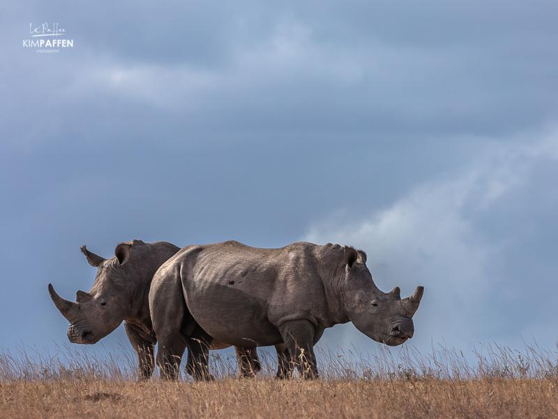 Rhino Photography in Shamwari South Africa