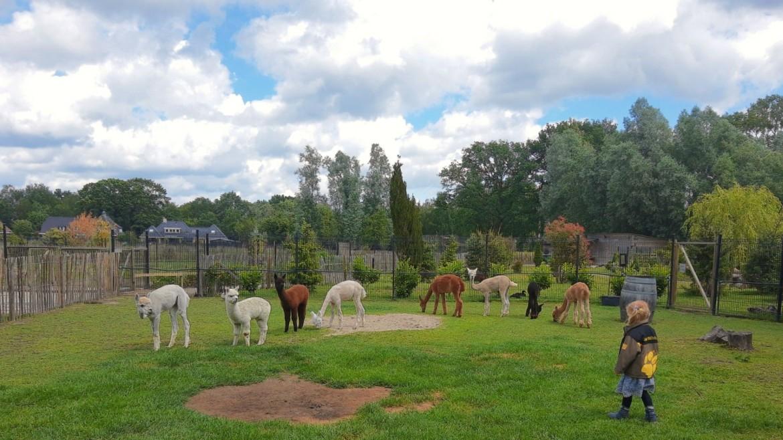 Dierenpark / kinderboerderij in Twente