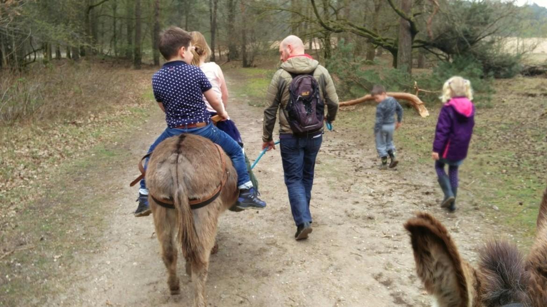 Wandelen met een ezel in de Maashorst