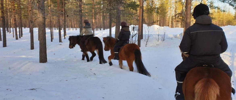 Paardrijden in de besneeuwde bossen van Zweeds Lapland