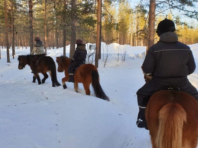 Paardrijden in Lapland met kinderen