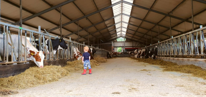 Melkveehouderij De Oostermaat Overijssel