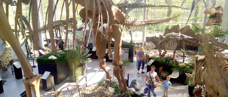 Museum in Brabant? Ontdek dinosaurussen van het Oermuseum