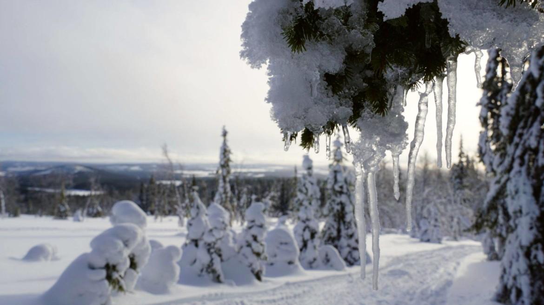 Sneeuwwandelen in Zweeds Lapland
