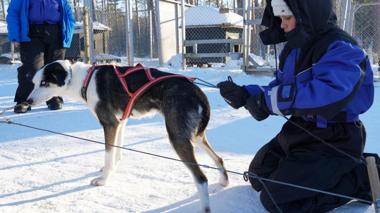 Huskytocht met kind in Lapland